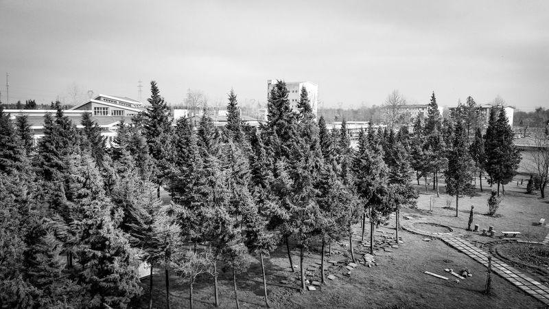 Guilan First Eyeem Photo No People Iran Rasht Blackandwhite Trees Sky University Black And White