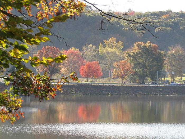 Autumn colors'