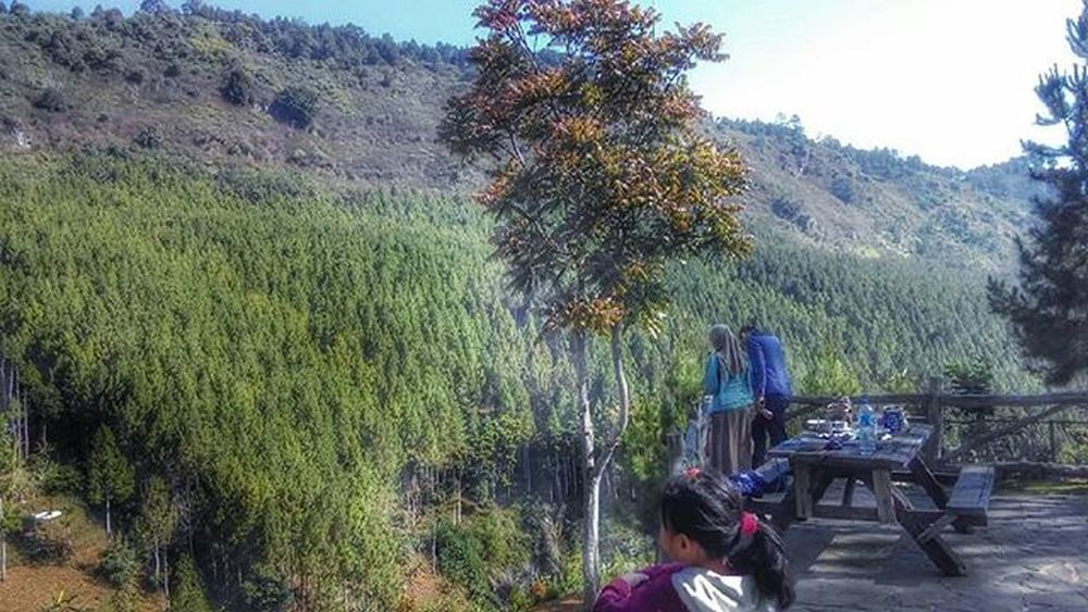 Barisan pohon pinus.... pengen trekking ke sana... Pinetrees Bandungbarat Lembang