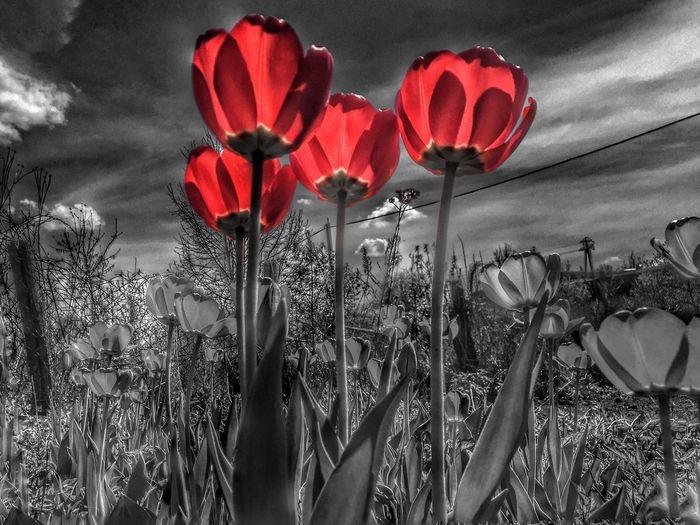 Hello World Nature Flowers Eye4photography  Taking Photos EyeEm Nature Lover EyeEm Best Shots Black And White Blackandwhite Sky