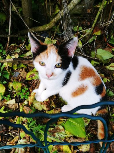 Ll Nougat ✨😻 Eye4photography  EyeEmNewHere EyeEm Gallery First Eyeem Photo Taking Photos Weekend ♥ Miauuu 😺 Animal Themes One Animal Domestic Cat Looking At Camera Domestic Animals Cute PortraitMammal Pets No People Plant Feline Day Outdoors Close-up Nature Loveanimals❤️