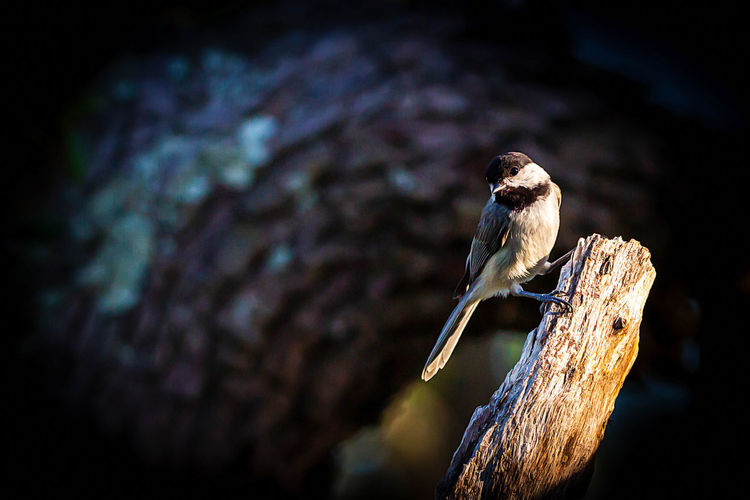 Animal Wildlife Animal Animal Themes Animals In The Wild One Animal Bird Vertebrate Perching Focus On Foreground Tree No People Nature Close-up Plant Day Outdoors Branch Sparrow Tree Trunk Selective Focus