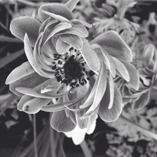 Enjoying The Sun Blackandwhite FlowerBorn Collection Walking Around