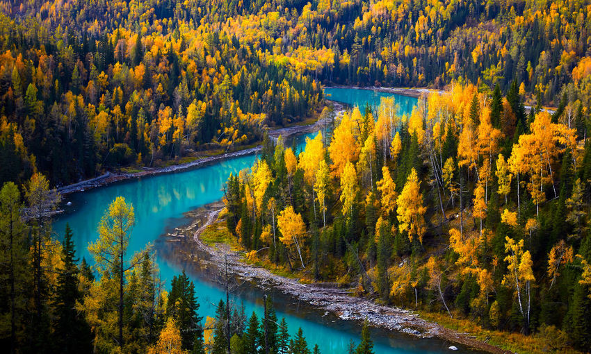 Scenic view of river amidst trees in forest during autumn