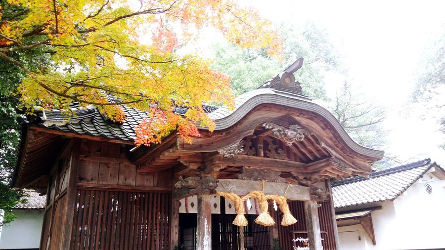 Japanese Shrine in Musashi Miyamoto Village at Mimasaka, Okayama, Japan Shrine Temple Shrine Of Japan Okayama Prefecture Mimasaka Japan Asian  Autumn Fall Season Trees Leaves 🍁 Daylight Morning Travel Tourism Musashimiyamoto Miyamoto Musashi Samurai Village Lost In The Landscape
