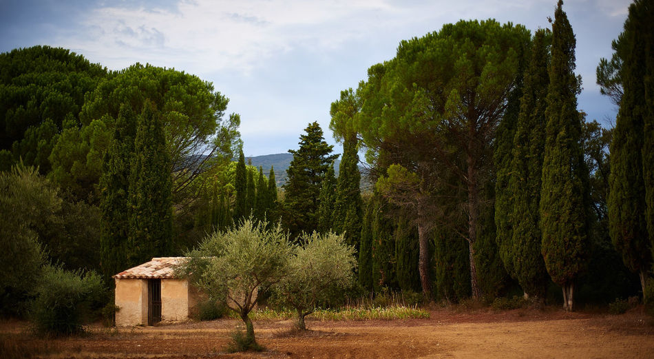 Landscape of La Provence Tree Plant Growth Sky Nature Green Color Land Beauty In Nature Tranquil Scene Cloud - Sky No People Forest Tranquility Day Scenics - Nature Non-urban Scene Outdoors Field Idyllic Architecture