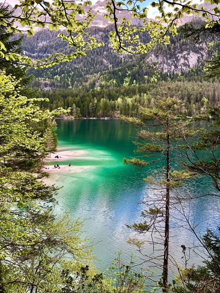 Lago di Tovel Evgiel Tree No People Day Nature Tranquility Reflection Green Color Outdoors Growth Scenics - Nature High Angle View Tranquil Scene Sunlight Idyllic Waterfront