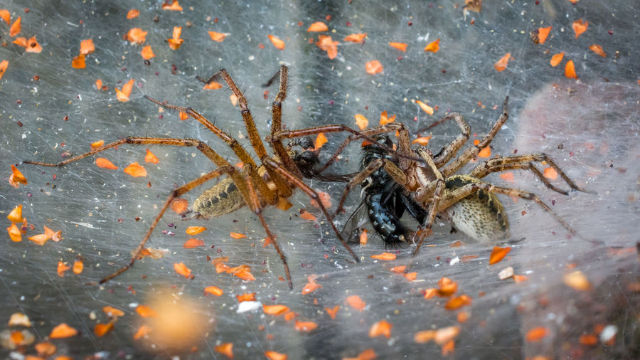 Close-up of spider in sea
