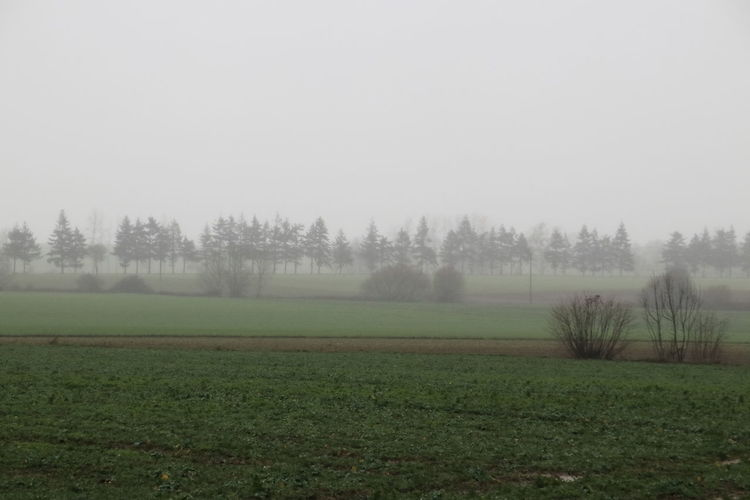 Country fog on
