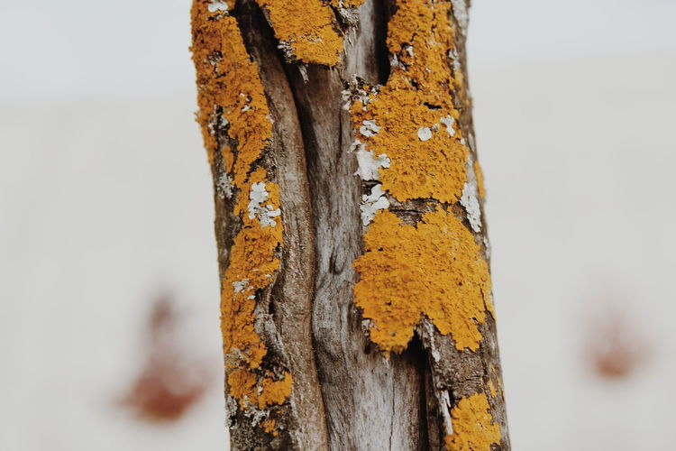 Close-up of old rusty tree trunk
