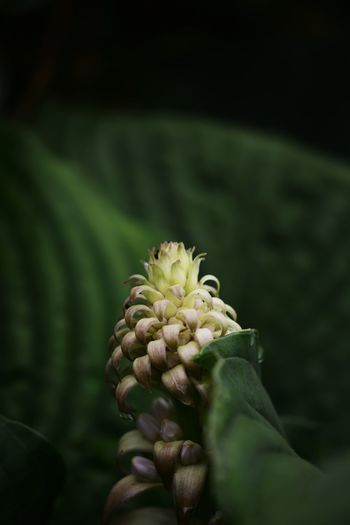 Close-up of hand on flowering plant
