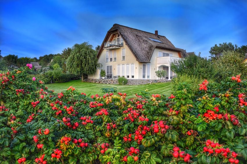 Ferienhaus mit Reetdach Architecture Flower Building Exterior Summer Cottage Beauty In Nature Plant Tranquil Scene Summer Views Achterwasser Tranquility Usedom NIKON D5300 EyeEm Best Shots Baltic Sea Germany Nature Nikon