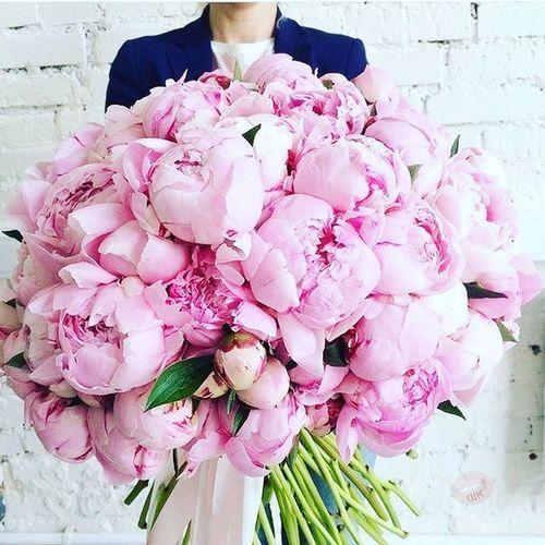 пионы люблююю ❤❤❤ букет Flowers Pink