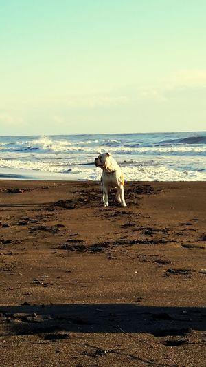 Bull Bulls Superdog American Bulldog Bulldog Americano Al Mare Il Paessaggio Piu Bello Bellissimo Che Mare Super Dog