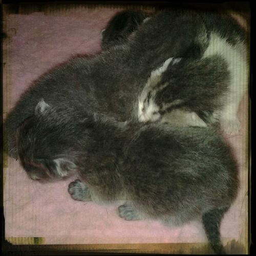 Mimi's kittens Cat Kittens Good Things Come In Small Packages With Lightcase Cute
