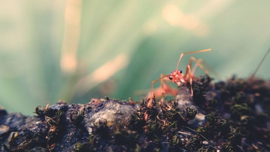 Insect Animals In The Wild Nature Animal Animal Themes Animal Wildlife Ant Outdoors No People Day Beauty In Nature Close-up Ant Macro The Great Outdoors - 2017 EyeEm Awards