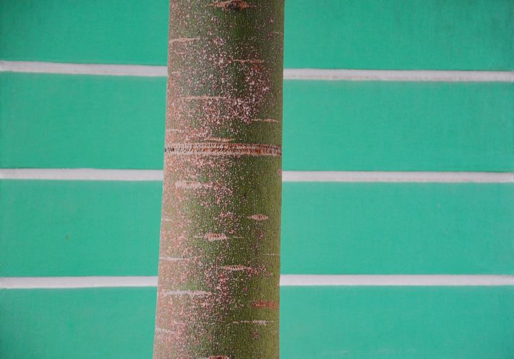 All Those Stripes Day Green Color No People Outdoors Close-up LINE Nature Tree Bark Façade Turquoise Stripes Full Frame Detail Tree In Front Of House The Graphic City