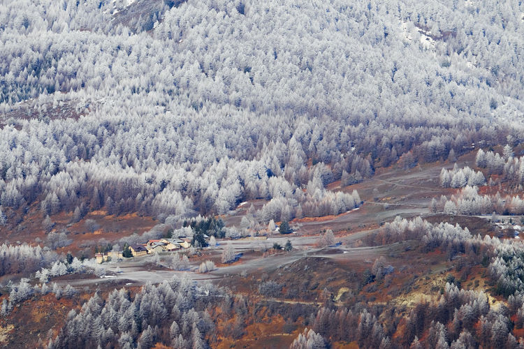 Trees on landscape during winter