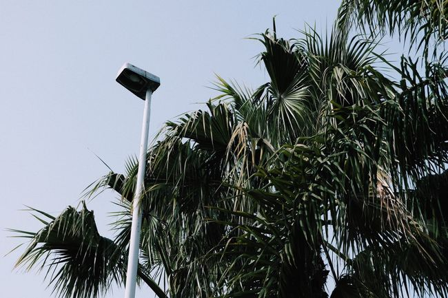 Plant Growth Tree Sky Tropical Climate Nature Low Angle View
