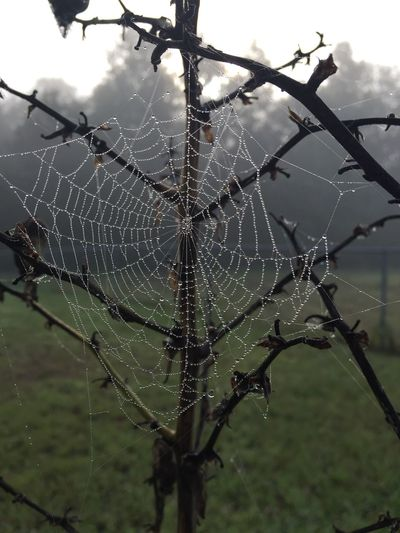 Close-up spiderweb