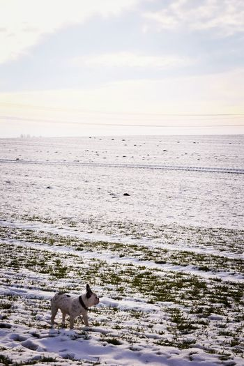 Nature Dog Animal Themes Outdoors Sky Skyporn Snowing Landscape Winter 2017 Fieldscape Wartberg How's The Weather Today? Dogs Of EyeEm January 2017 Cold Temperature Pets Dogwalk Dogslife Domestic Animals French Bulldog Frenchbulldog Day Silhouette Bokeh Winter