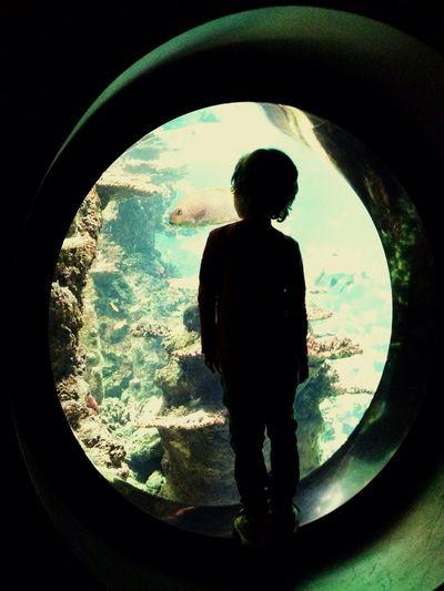 Boulogne-sur-Mer Tourism Kids Shadow