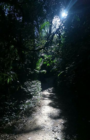 Creative Light And Shadow Light And Shadows In The Forest The Pursuit Of Happiness Tadaa Community Excercising Naturelover EyeEm Nature Lover Magic Forest Connected With Nature Nature_collection