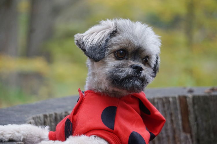Mille Dog Dogs Halloween Cute Dog  Cute Pets Forest Pets Portrait Dog Puppy Pet Clothing Red Cute Young Animal Close-up Pet Equipment Mixed-breed Dog Pet Collar Panting