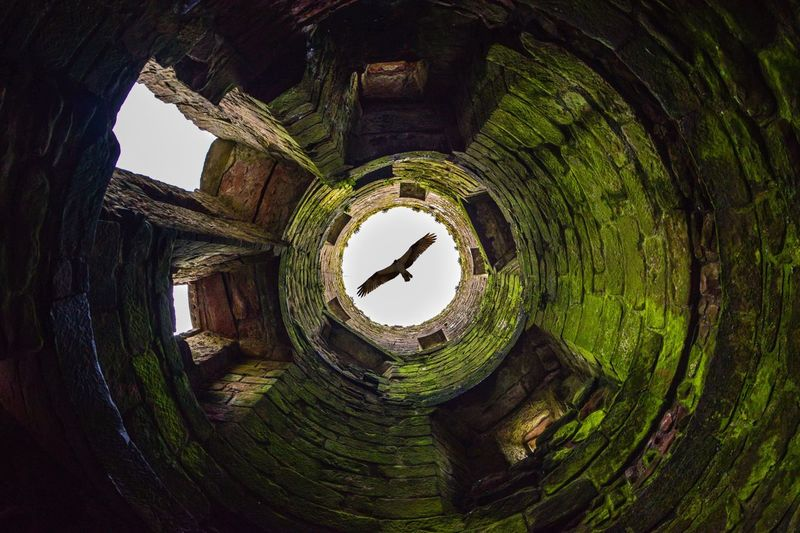 Assassin's Creed Tower Eagle Bird Look Up Moss Castle Ruins Caerlaverock Castle Old Ruin Architecture Ancient Medieval Abandoned Mossy Scotland History Ruins Of A Castle