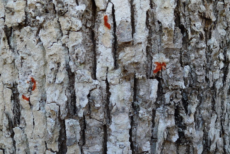 Close-up of insect on tree trunk against wall