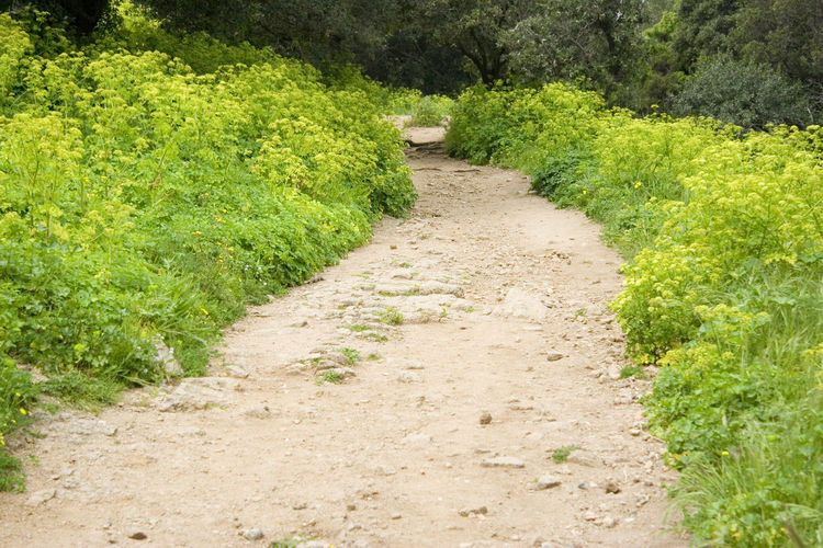 hiking trail - spring on the French Riviera Diminishing Perspective Dirt Road Footpath France Grass Hay Fever Hiking Trail Meadow Nature No People Offroad Outdoors Path Pathway Pedestrian Walkway Provence Rocky Sentier Du Littoral Spring Springtime The Way Forward Trail Unpaved Walkway Wildflower