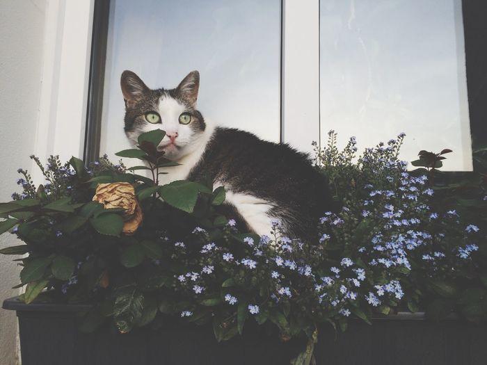 Cat sitting in window box outside house
