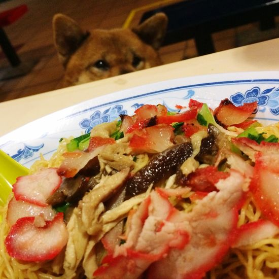 Shiba Inu Shiba Inu LOVE Noodles IPhoneography Dinner Singapore