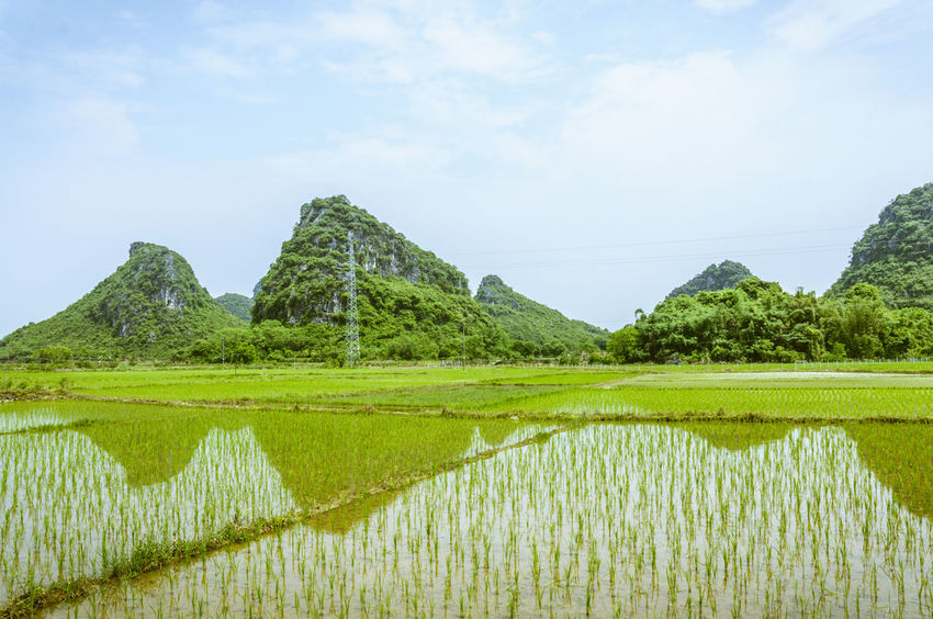 Beautiful countryside and mountains scenery in spring Agriculture Beauty In Nature Beauty In Nature Clear Sky Countryside Day Fields Green Color Growth Guilin, Guangxi, China Karst Landscpe Mountains Nature Outdoors Picturesque Relfection Rice Paddy Rice Planting Scenic Scenics Sky Spring Tranquil Water