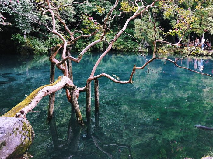 Tree Nature Outdoors Beauty In Nature Tranquility Water Day No People Scenics Tranquil Scene Lake Branch Forest Dead Tree Sky Nikon Vscocam Vscogood VSCO Beauty In Nature Zen Japan Japan Photography (null)Nikonphotography The Week On EyeEm