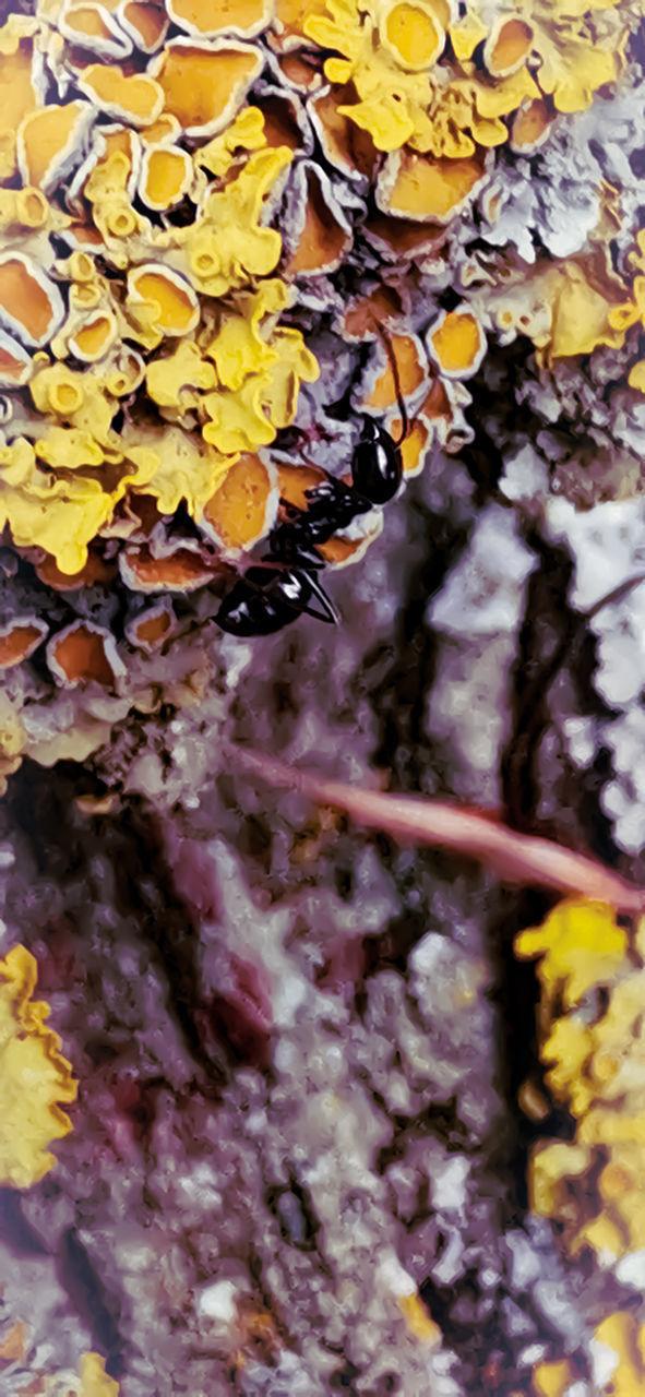 FULL FRAME SHOT OF YELLOW LEAVES ON PLANT