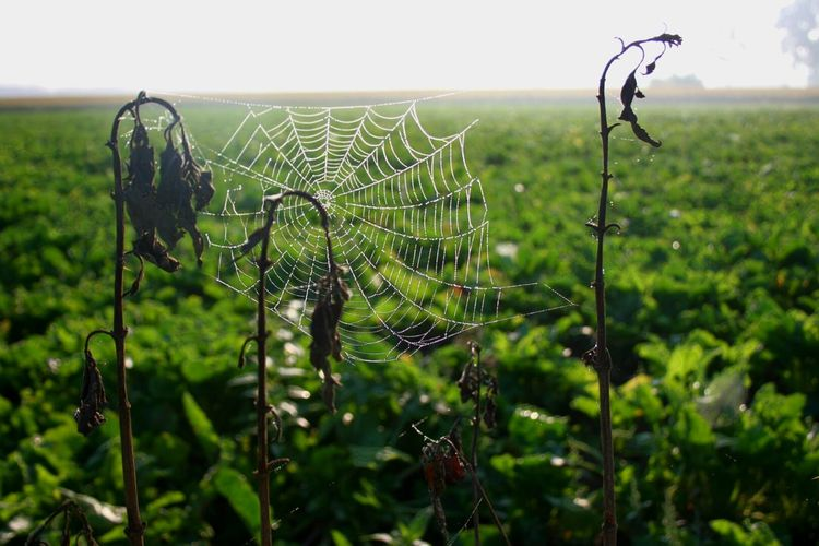 Nature's Diversities Taking Photos Check This Out Hello World Nature Photography Nature Outdoor Photography Outside Early Morning Dew Drops HerbrichtCobweb Spiderweb In Morning Dew