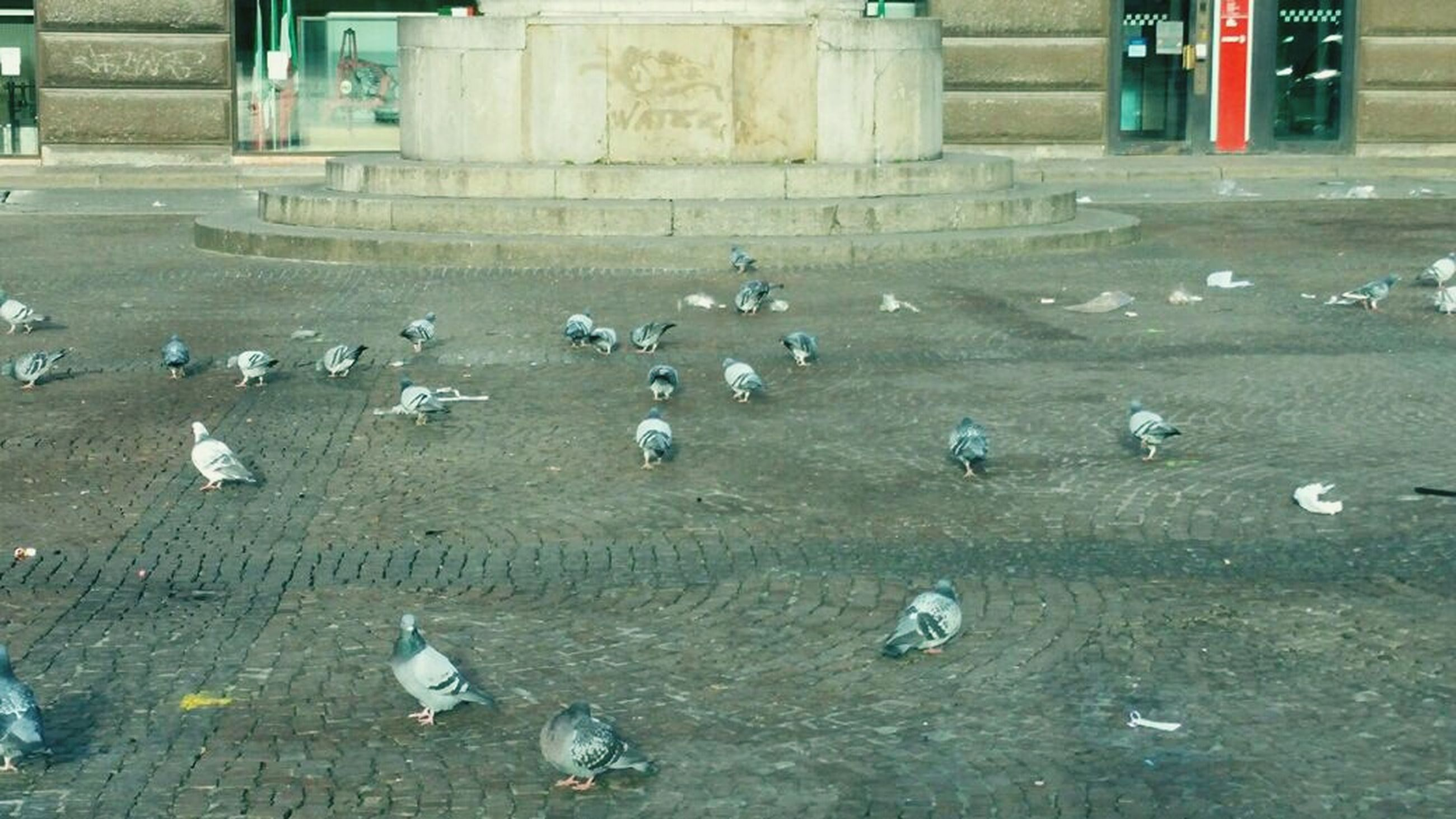 bird, animal themes, wildlife, animals in the wild, high angle view, day, outdoors, building exterior, built structure, no people, white color, street, nature, architecture, empty, pigeon, sunlight, absence, sand