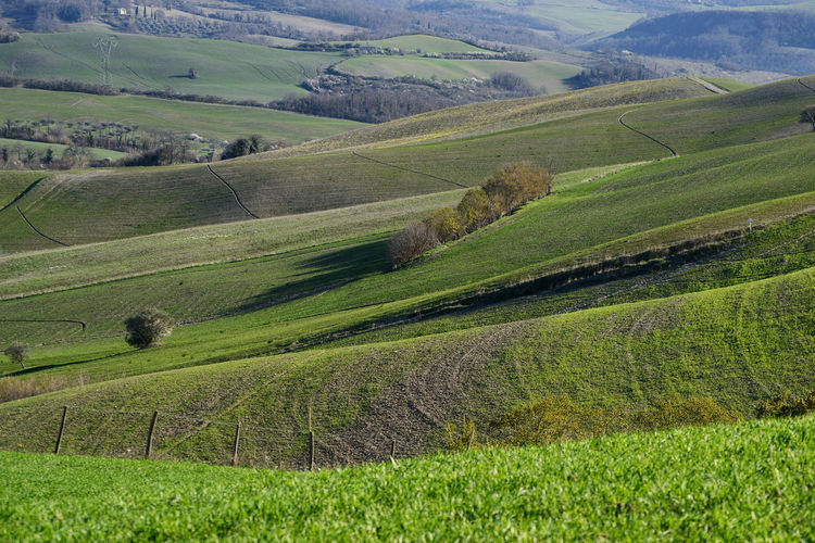rolling hills in Tuscan countryside Landscape Environment Green Color Rolling Landscape Outdoors Rolling Hills Grass Agriculture Growth Nature Beauty In Nature Idyllic No People Land Scenics - Nature EyeEm Best Shots Field Tuscany Val D'orcia