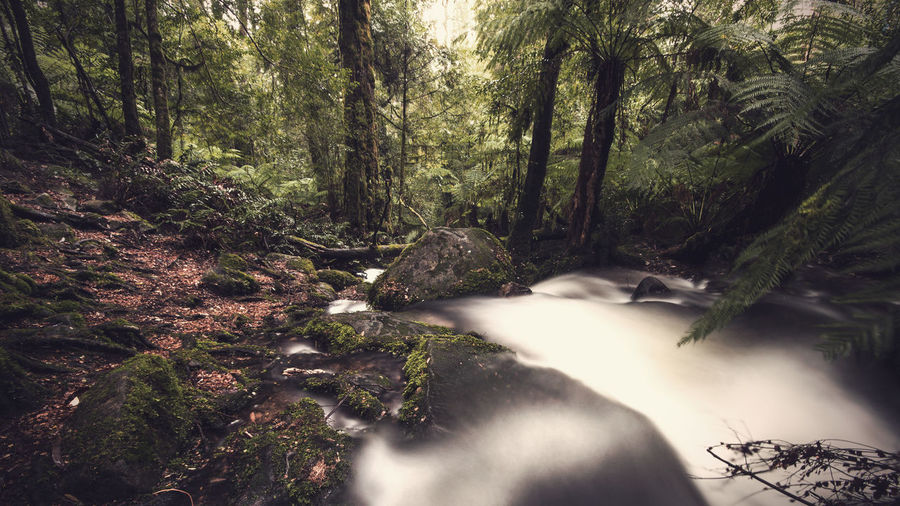 River flowing through rocks against trees in forest
