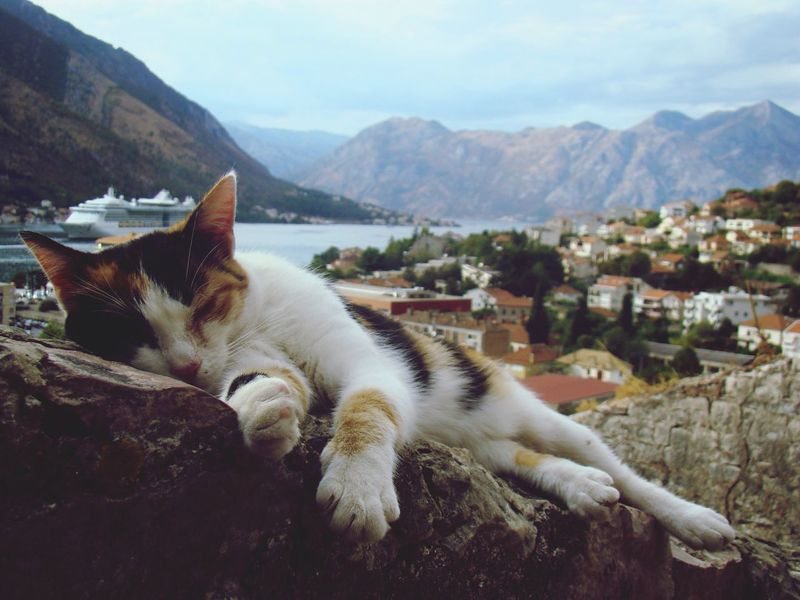 Sommergefühle One Animal Animal Themes Mountain Domestic Animals Pets Day Domestic Cat Relaxation No People Outdoors Nature Close-up EyeEmNewHere EyeEm Best Shots Cats Sea And Blue Sky Summer Montenegro Kotorbay Kotorfortree Fortress Sleepy Kitty Sleepyhead Sleepy Cat