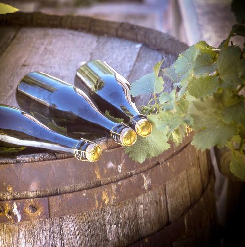 Vineyard and
