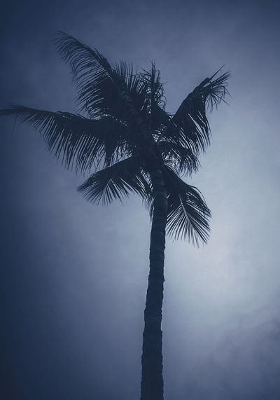 Lifes and lifestyle Beauty In Nature Coconut Palm Tree Growth Leaf Low Angle View No People Outdoors Palm Tree Plant Scenics - Nature Silhouette Sky Tree Tree Trunk Tropical Climate Tropical Tree Vignette