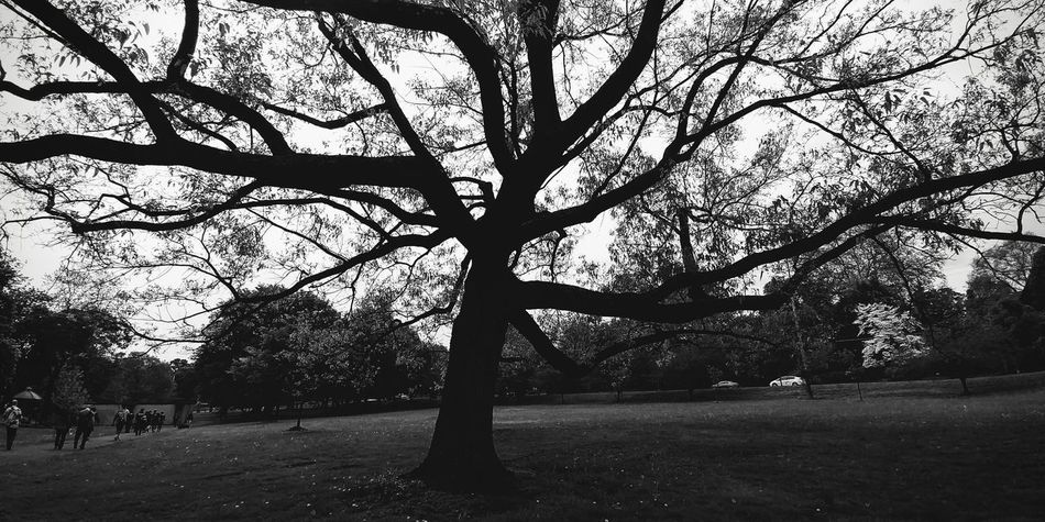 Tree Outdoors Growth Branch Day Nature Tree Trunk Sky No People Beauty In Nature Beauty In Nature Monochrome Photography Black&white Pittsburgh Lgg6 Wide Angle PhonePhotography Bnw_lover Bnw_collection Front Or Back Yard