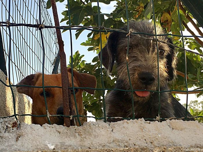 Sardaigne  Outdoors No People Animal Themes Close-up Portrait Mammal Cani Chiens Grillage Investing In Quality Of Life Sardaigne  Dogs Dogs Of EyeEm Atos Baffetto Pet Portraits