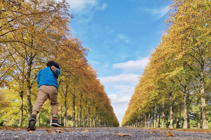 Rear view of man amidst trees against sky during autumn