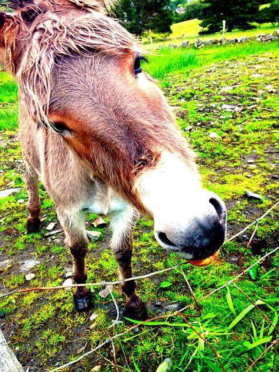 Eyeemphoto Donkey Eatinga:Lovely weather]ndscape]rGreen ColorpGreenerycGreenfieldsrNaturenAnimalsNFarm LifemCountrysidefe Country Life