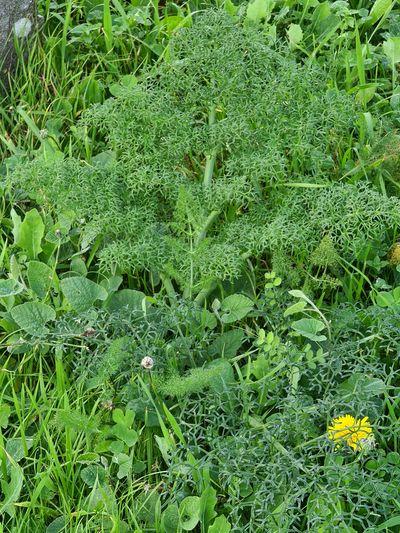 Full frame shot of fresh green plants on land