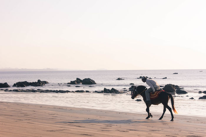 It is quite rare to see a horse at the beach these days Eye4photography  EyeEm Horse Beachphotography Enjoying Life Check This Out Sand Beach Shootermag