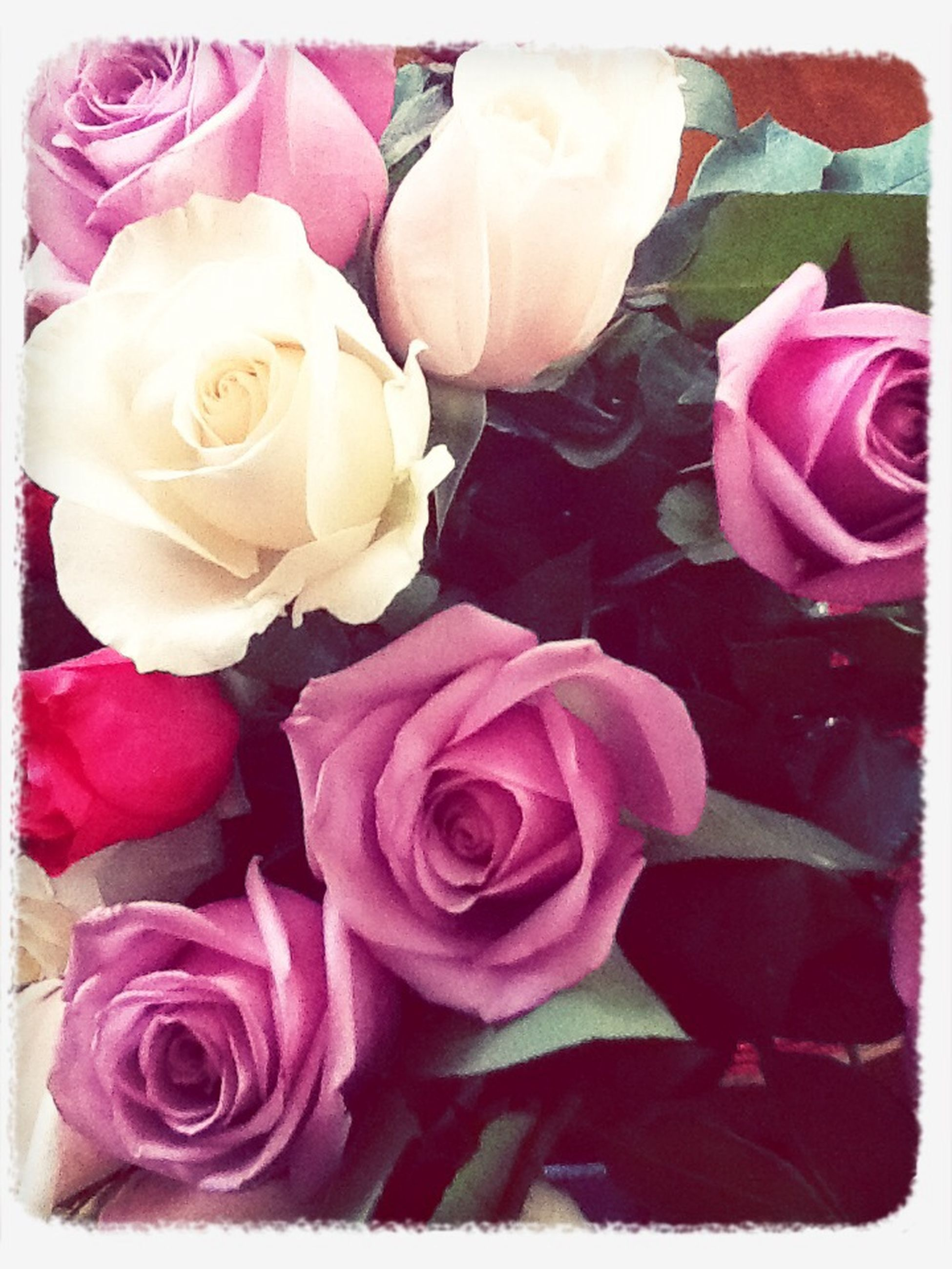 flower, rose - flower, petal, transfer print, freshness, fragility, flower head, rose, pink color, beauty in nature, auto post production filter, indoors, close-up, nature, bouquet, high angle view, growth, softness, pink, no people